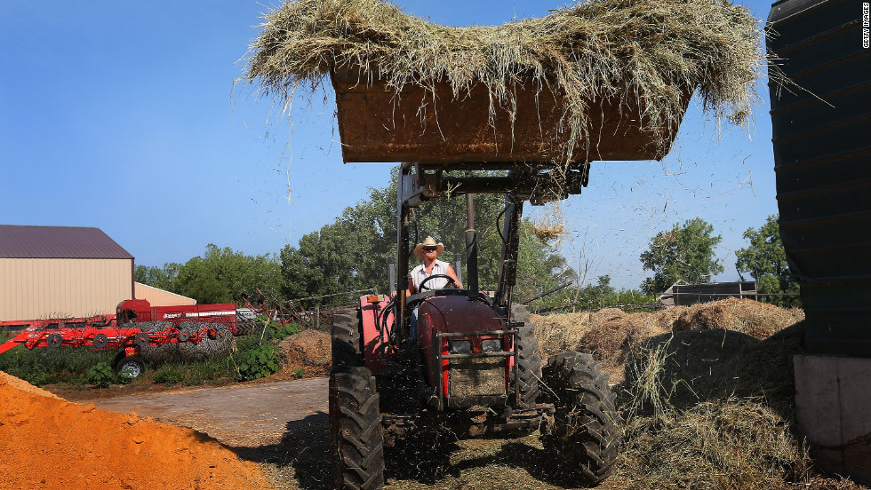 Jeremy Tilton adds hay to a feed mixer for cattle he raises on pastureland near Cuba, Illinois.