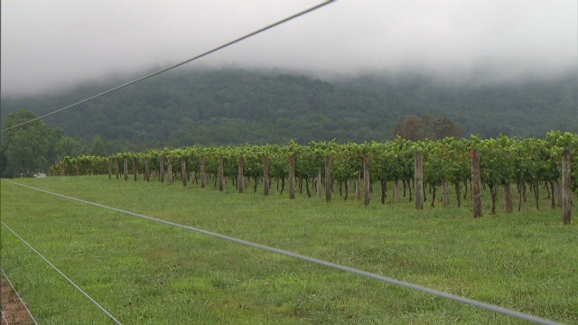 Jones-Drought and Wineries_00004013