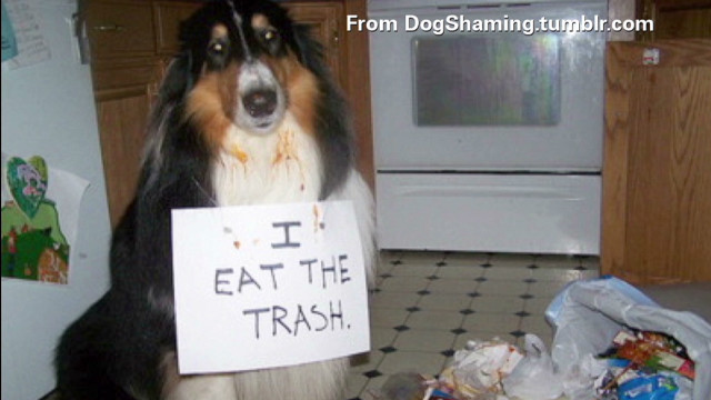 pkg moos dog shaming_00002212