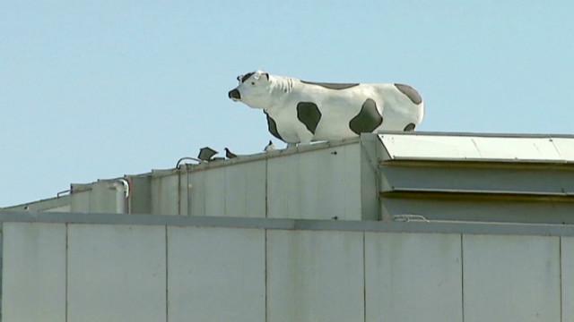 cnne hurtado la cows_00011216