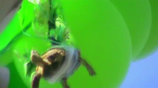 turtle inform new_00003403
