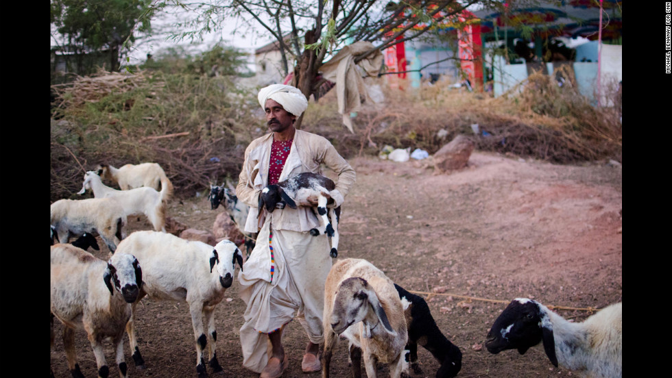 Though the pre-wedding festivities are already under way in the background, Khambhalya's family still has to look after its 200 or so sheep and goats.
