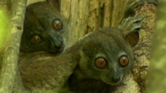 inside africa madagascar biodiversity lemurs_00023227