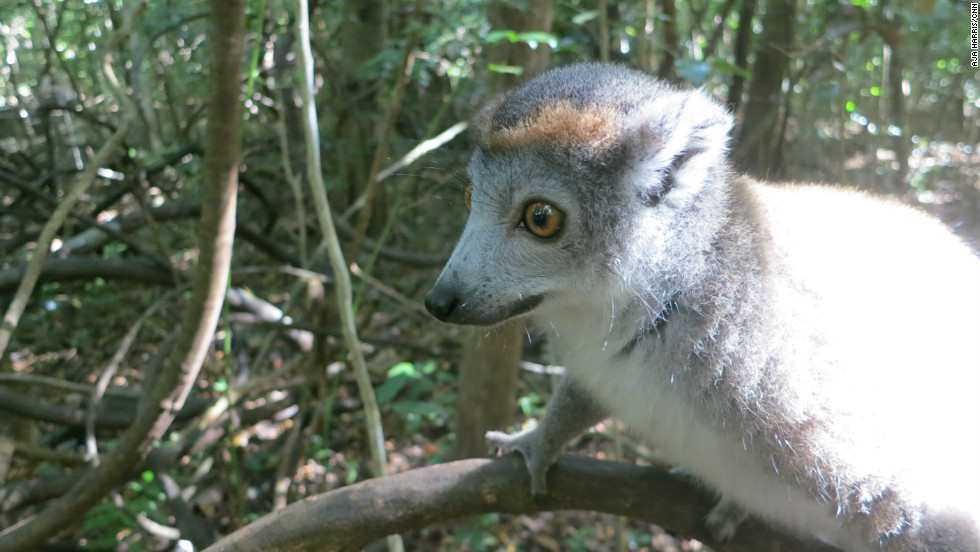 The country is famous for its biodiversity and unique animals such as lemurs.