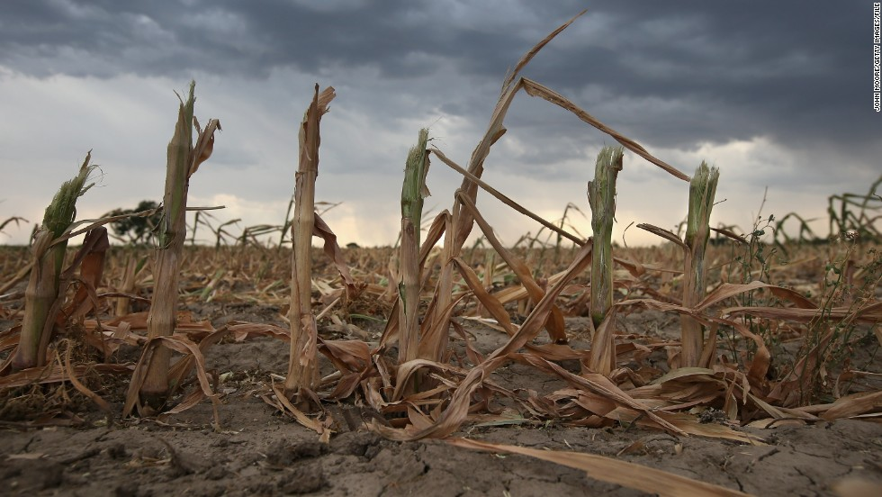 Rain clouds move over the remnants of parched corn stalks near Wiley, on the plains of eastern Colorado, on August 22, 2012. A summer storm came too late to help farmers whose crops were decimated in the exceptional drought in Colorado's eastern plains.