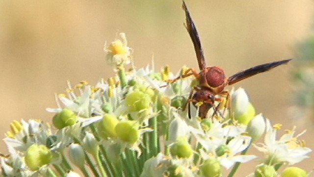 Man dies from wasp sting