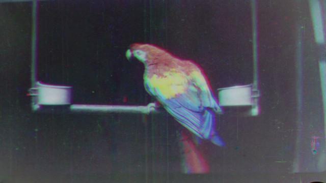 pkg han oldest color film revealed_00010713