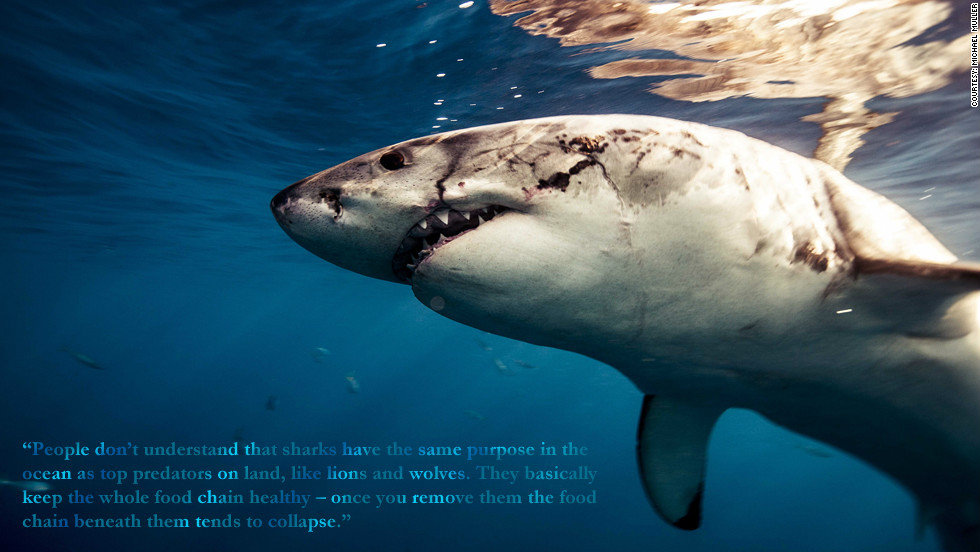 """Phillippe Cousteau: """"People don't understand that sharks have the same purpose in the ocean as top predators on land, like lions and wolves. They basically keep the whole food chain healthy -- once you remove them the food chain beneath them tends to collapse."""""""