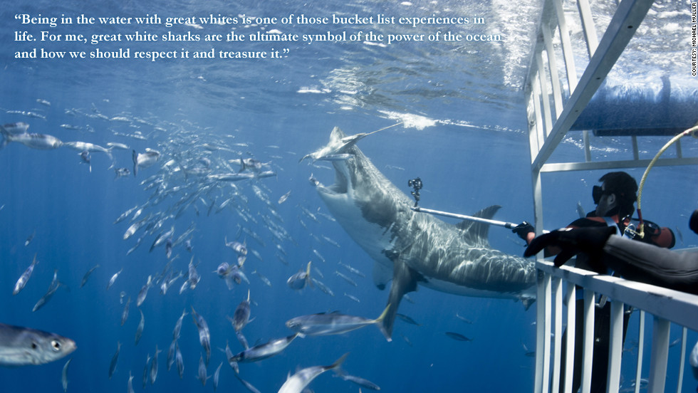 "Phillippe Cousteau: ""Being in the water with great whites is one of those bucket list experiences in life. For me, great white sharks are the ultimate symbol of the power of the ocean and how we should respect it and treasure it."""