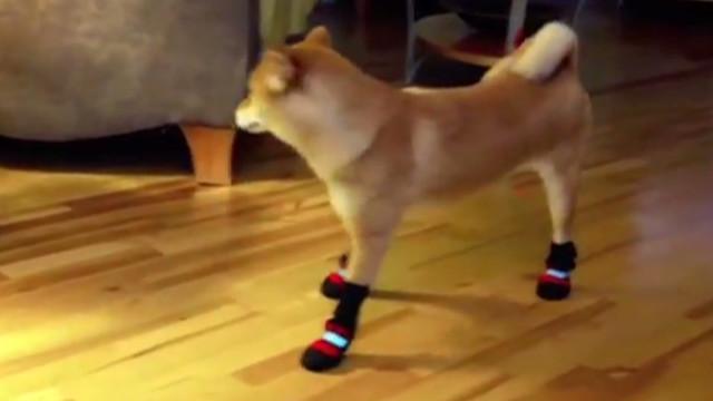 orig jtb distraction dog boots_00002623