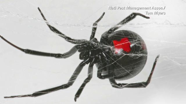 health.minute.spider.bites_00002903