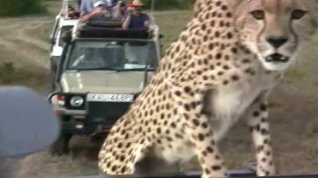 tsr pkg moos eye to eye cheetah_00000818
