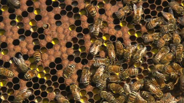 pkg lake bees at waldorf astoria hotel _00001301