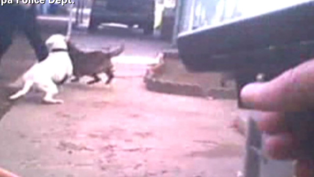 Dogs Attack Officer shots fired_00002330