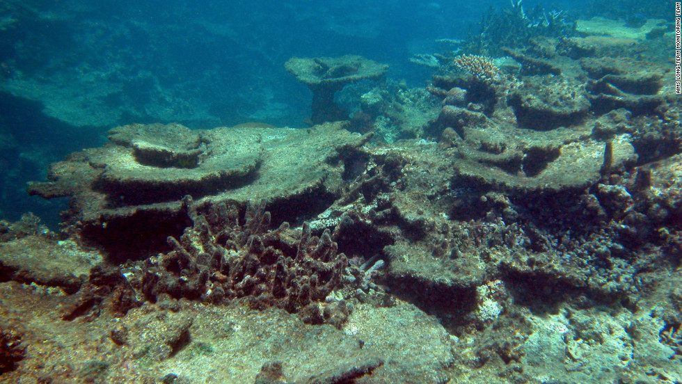 The image shows damage inflicted on Beaver Reef, part of the Great Barrier Reef, by the crown-of-thorns starfish, a species native to Australia which feeds on coral.