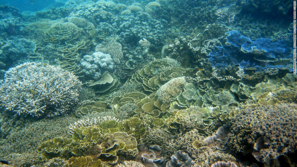 The image shows MacDonald reef before damage inflicted by a cyclone. Strong winds whip waves which smash the coral in shallow areas, particularly towards the southern end of the Great Barrier Reef.