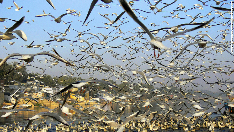 Raghav Paul, 14, took a shot of migratory birds in India.