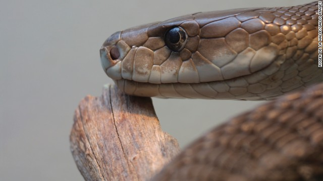 Venom from snakes, scorpions and bees may have an element that could stop cancer cell growth.