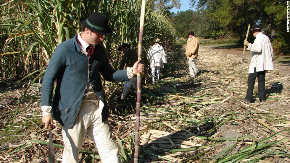 """Workers at Middleton Place demonstrate the sugar cane harvest during """"Plantation Days"""" at the historic landmark."""