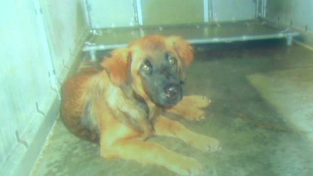 kaye.animal.shelter.gas.chamber_00001410