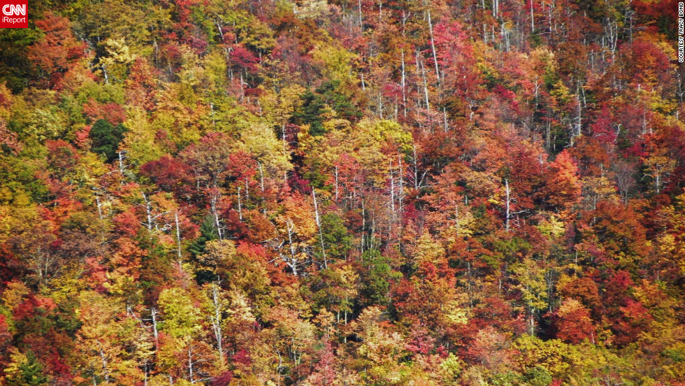 "The Cherohala Skyway in Tennessee and North Carolina provides an unparalleled view of autumn color in the <a href=""http://ireport.cnn.com/docs/DOC-858396"">Cherokee National Forest</a>."