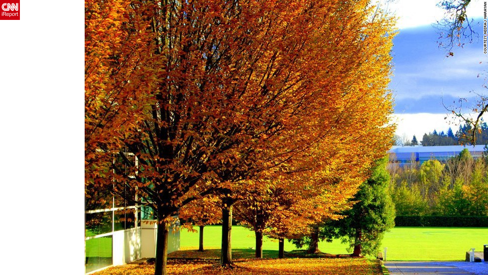 """The leaves make the entire landscape shine,"" said Neeraj Narayan of these golden trees in <a href=""http://ireport.cnn.com/docs/DOC-852701"">Beaverton, Oregon</a>."