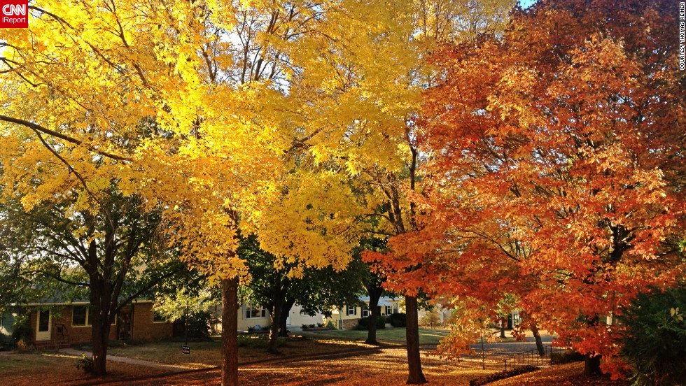 "Gorgeous trees fill a <a href=""http://ireport.cnn.com/docs/DOC-852057"">Robbinsdale, Minnesota,</a> neighborhood with colorful leaves. This autumn ""has been one of the most vibrant I've ever seen,"" said Thomas Reiner, who lives here."