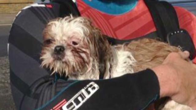 tsr moos dog marooned at sea_00015126