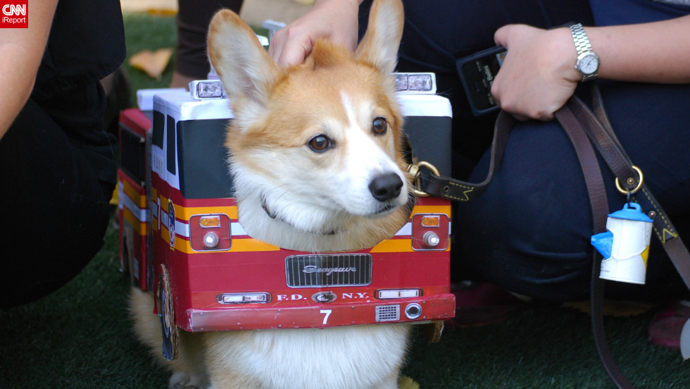 "iReporter Rachel Cauvin captured this adorable Corgi-as-firetruck costume <a href=""http://ireport.cnn.com/docs/DOC-861762"">at a 2012 Halloween dog parade</a> in New York."