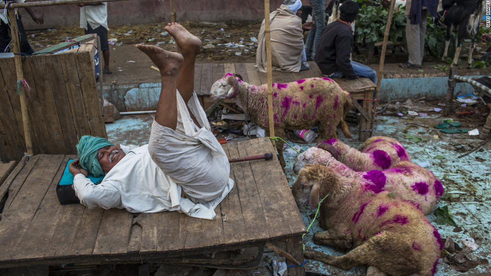 A goat vendor waits for customers to buy animals for the sacrificial festival in New Delhi on Saturday.