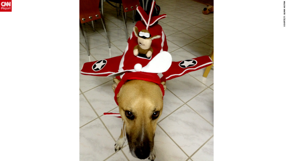 "iReporter Quan Huynh's dog, Rocky, serves as a <a href=""http://ireport.cnn.com/docs/DOC-865334"">plane for an ace pilot</a>."