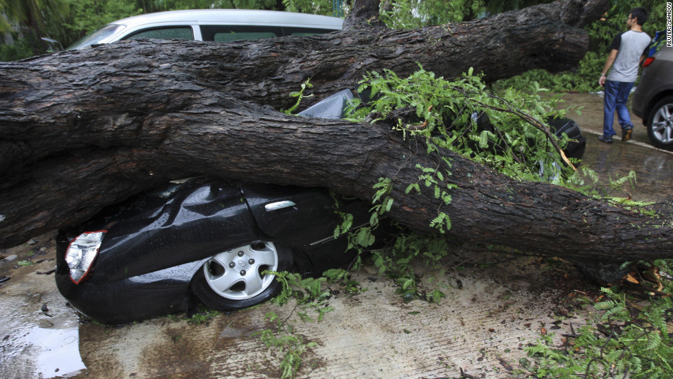 An uprooted tree crushes a car in China on Sunday.