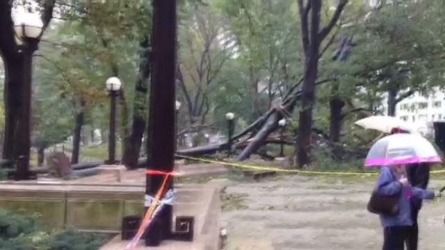 Sandy's damage to Central Park