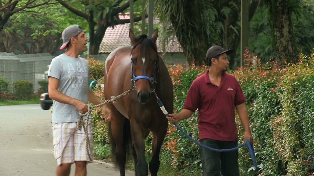 Singapore attracts top horse trainers