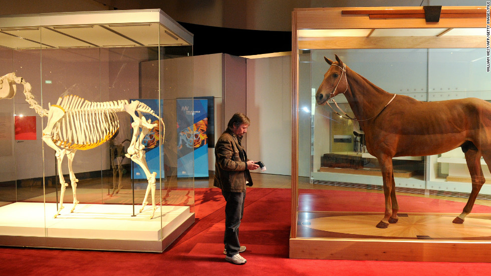 Head to Australia's Victoria Museum and you'll find an entire room dedicated to champion race horse Phar Lap -- including his skeleton and body.