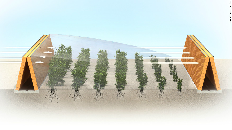 """Evaporated seawater will be used to create cool, humid conditions inside the greenhouse allowing plants to thrive. Condensers creating freshwater which will irrigate the crops. Outside, evaporator """"hedges"""" (pictured) will be used to help grow desert-hardy plants."""