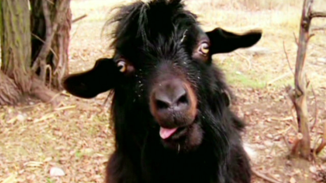 ac ridiculist goat chases teen_00023222