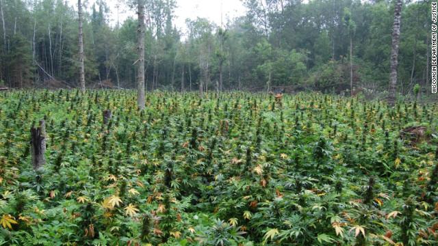 Wisconsin is targeting illegal marijuana growers taking advantage of its vast, remote public land.