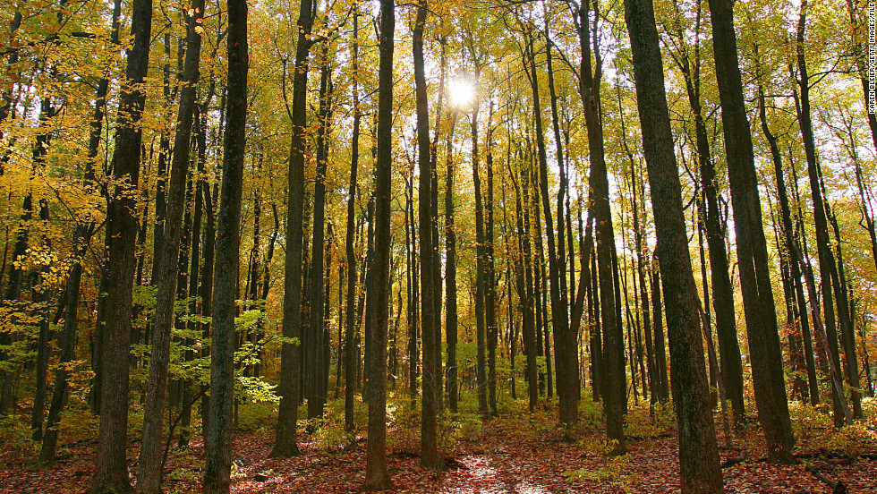 """Meditation teacher Pat Coffey often practices what he calls """"nature meditation"""" by simply taking a walk through Shenandoah National Park near his home outside Charlottesville, Virginia."""