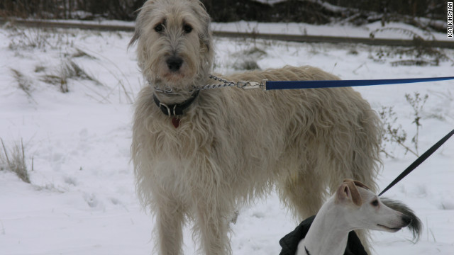 Mordred  takes a walk  in the snow with Morgane