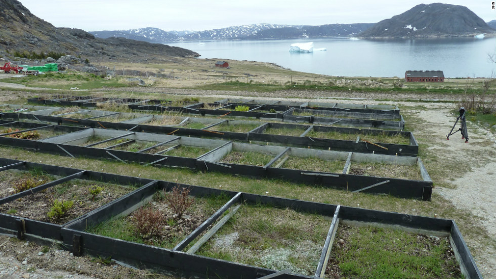 The Research farm for Greenland's Agricultural Advisory Service. Planting seeds while watching icebergs is common in Greenland.