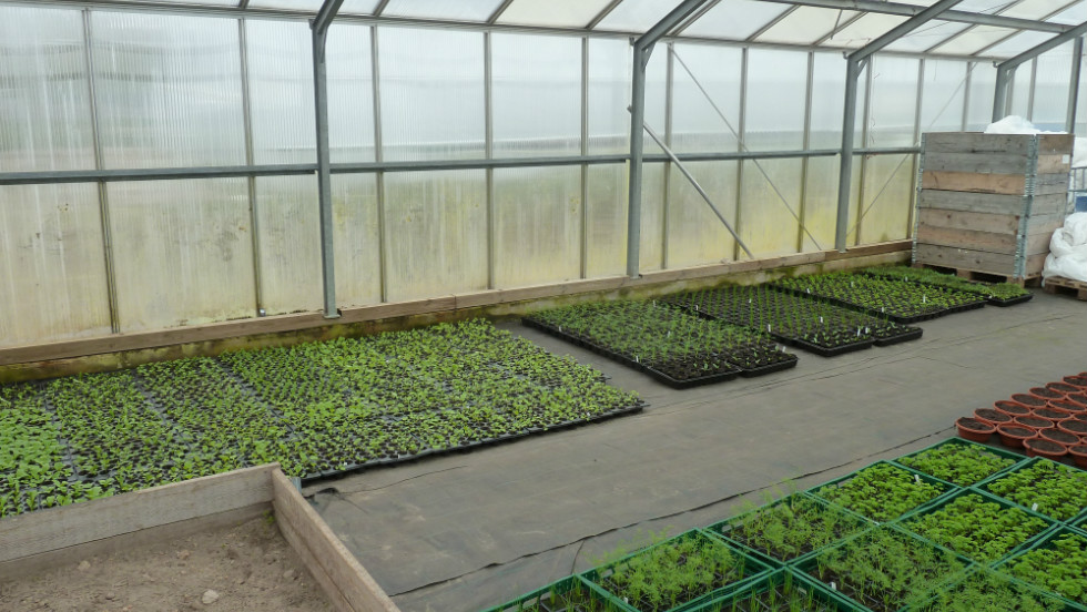 Greenhouse where herbs are grown. The variety of crops has dramatically increased in the past years.
