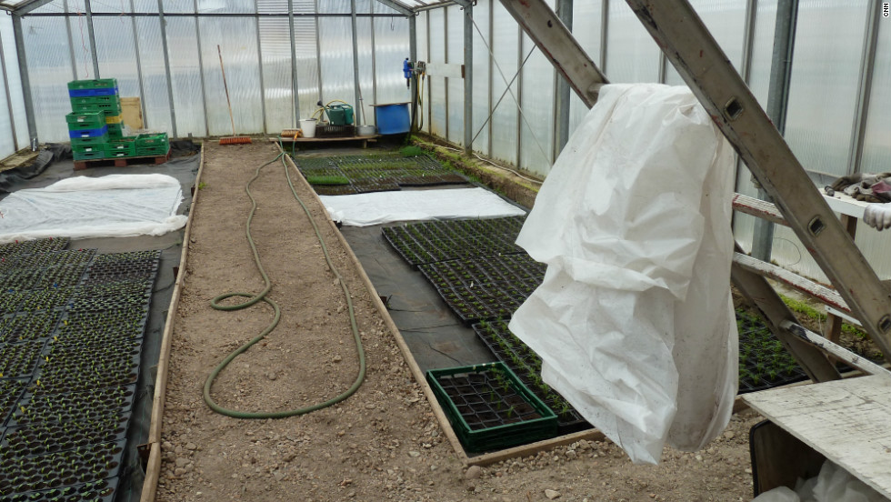 Crops like potatoes and cabbage are becoming more common in Greenland. Now the gardeners are experimenting planting strawberries.