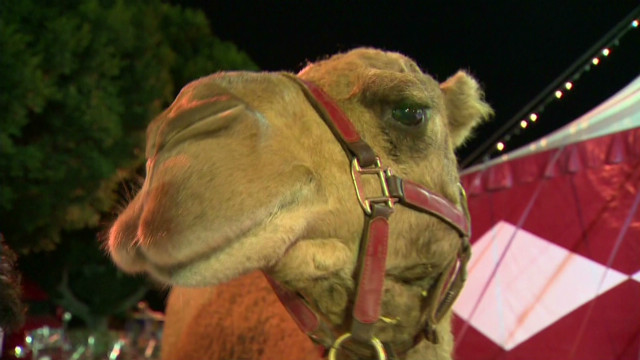 dnt camel escapes circus_00012314