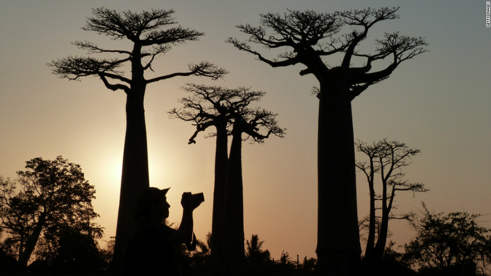 After trying Madecasse's Madagascar-made chocolate, trace it back to its source and explore the country's natural features yourself such as along the Avenue of the Baobabs.