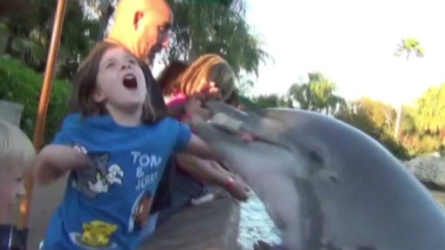 Girl bitten by dolphin at SeaWorld