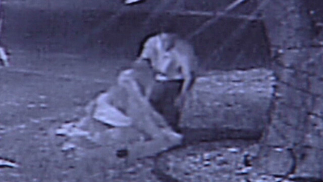 Watch thief steal Christmas decorations