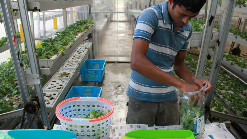 While 'vertical' vegetables cost more than normally-grown varieties, some buyers have said that they buy it because it is locally grown and thought to be safer than other imported produce.