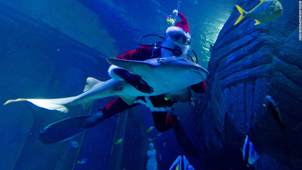 A diver dressed as a Santa Claus dives with a nurse shark in the Sea Life Aquarium in Munich, Germany, on December 6, which is St. Nicholas Day.