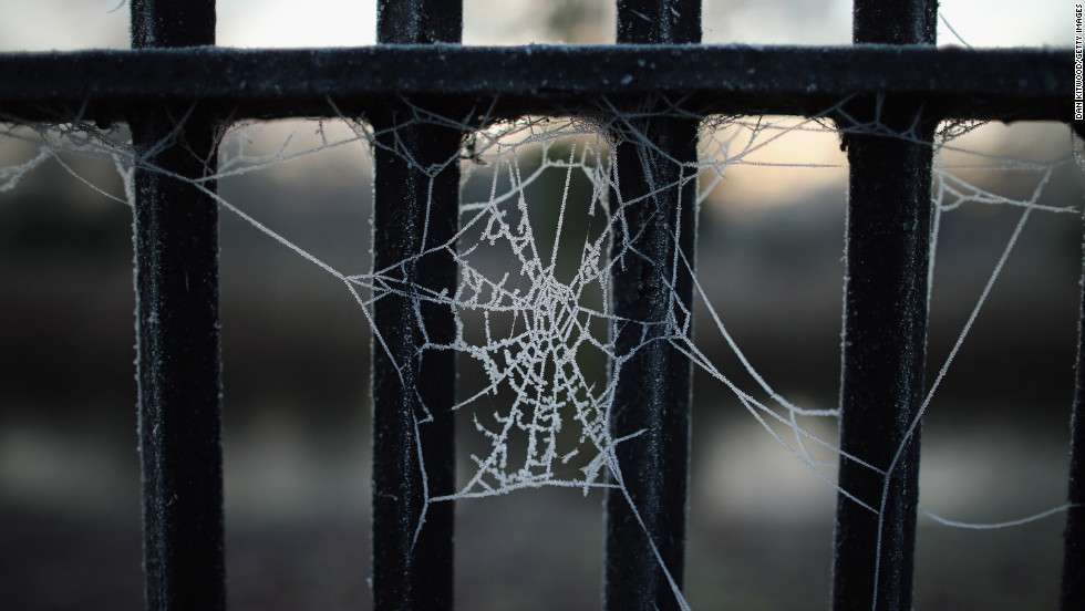 The early morning frost clings to a cobweb in Regents Park on December 12.